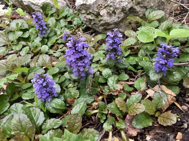 little purple flowers